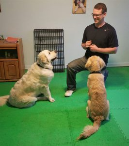 Dan Grant Denver dog training